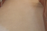 professional carpet cleaning devon